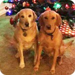 Emma and Penny, Flower Mound Texas