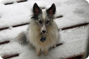 Bad weather blues: Dog in snow wishing it was playing indoors